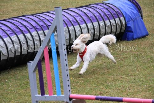 findon_valley_dog_show_2017 (1)