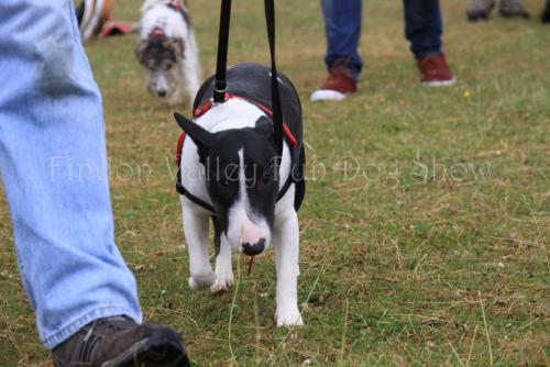 findon_valley_dog_show_2017 (10)