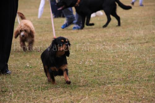 findon_valley_dog_show_2017 (12)