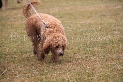 findon_valley_dog_show_2017 (13)