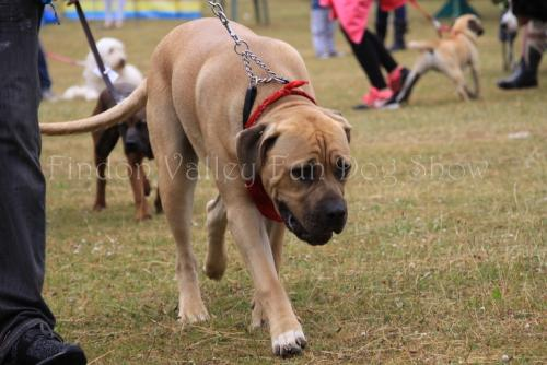 findon_valley_dog_show_2017 (15)