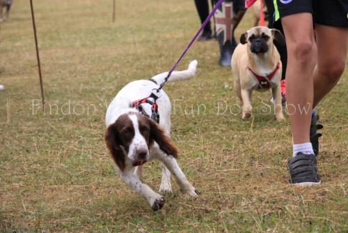 findon_valley_dog_show_2017 (18)