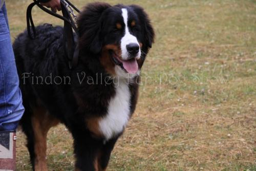 findon_valley_dog_show_2017 (19)