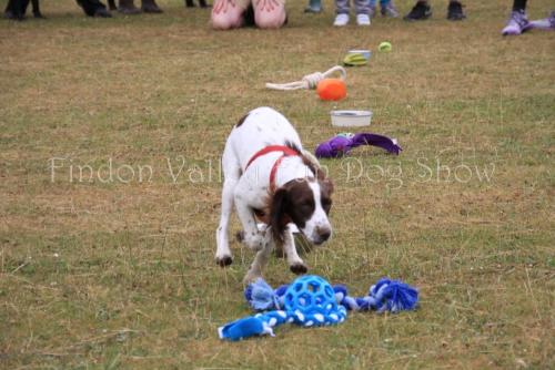findon_valley_dog_show_2017 (2)