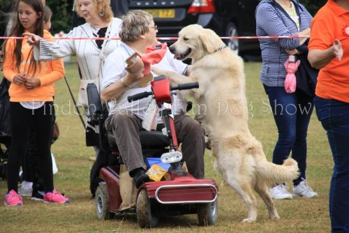 findon_valley_dog_show_2017 (24)