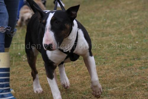 findon_valley_dog_show_2017 (27)