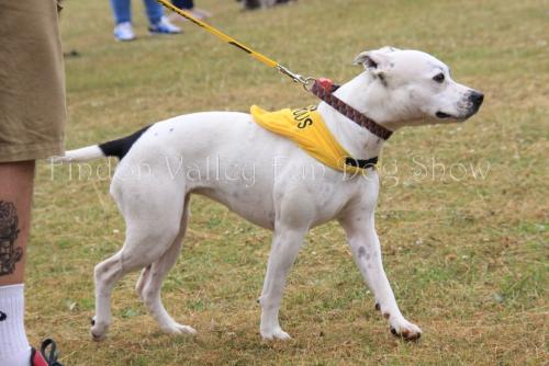 findon_valley_dog_show_2017 (28)