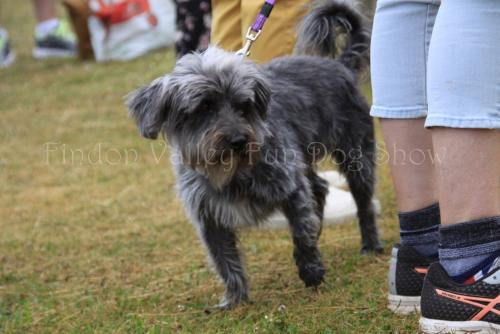 findon_valley_dog_show_2017 (29)