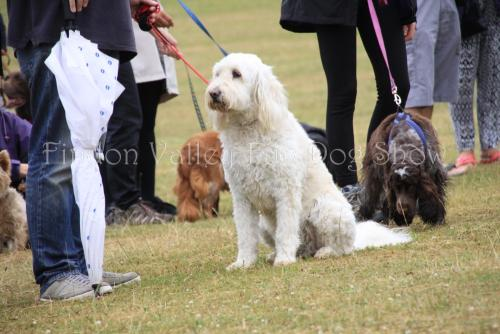 findon_valley_dog_show_2017 (30)