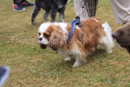 findon_valley_dog_show_2017 (31)