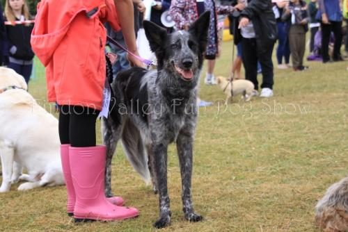 findon_valley_dog_show_2017 (34)