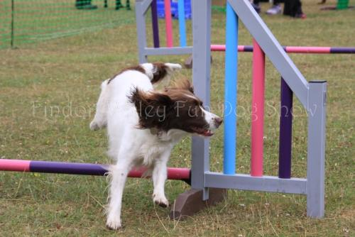 findon_valley_dog_show_2017 (35)