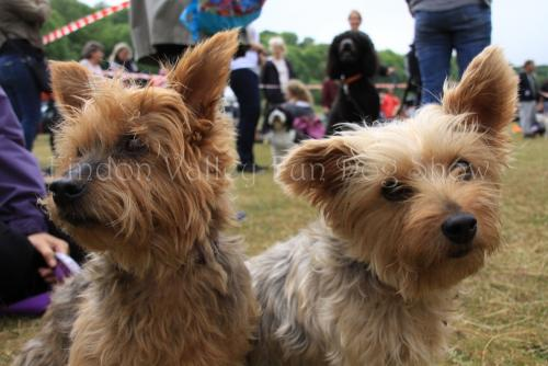 findon_valley_dog_show_2017 (37)