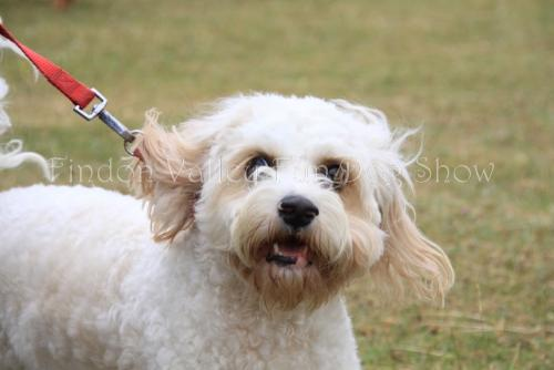 findon_valley_dog_show_2017 (39)
