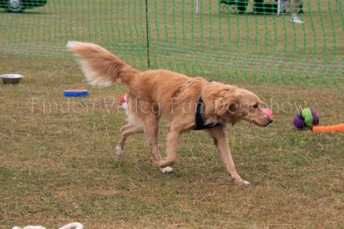 findon_valley_dog_show_2017 (4)