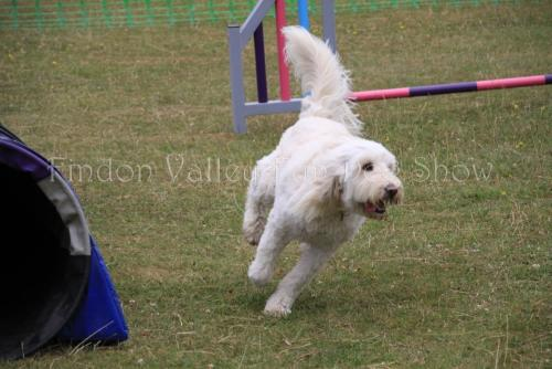 findon_valley_dog_show_2017 (42)