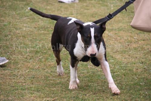 findon_valley_dog_show_2017 (43)