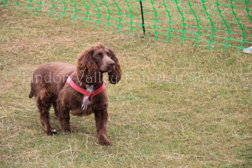 findon_valley_dog_show_2017 (44)