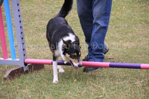 findon_valley_dog_show_2017 (47)