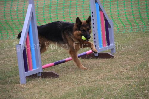findon_valley_dog_show_2017 (49)