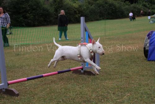 findon_valley_dog_show_2017 (5)