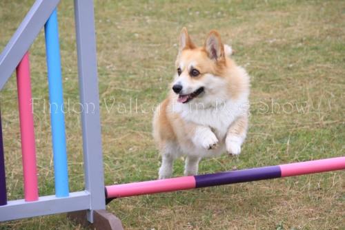 findon_valley_dog_show_2017 (50)