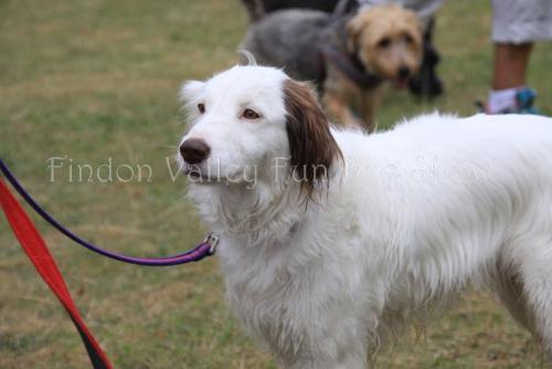findon_valley_dog_show_2017 (51)