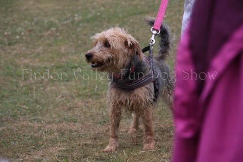 findon_valley_dog_show_2017 (52)