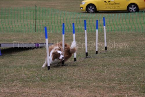 findon_valley_dog_show_2017 (53)