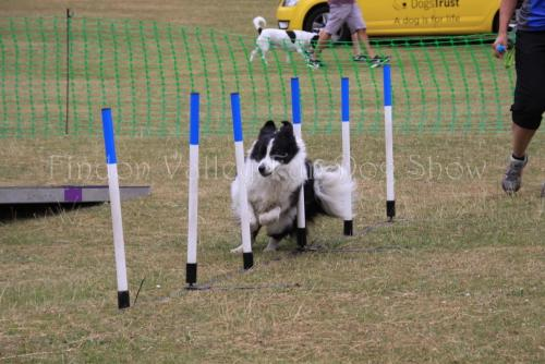 findon_valley_dog_show_2017 (54)