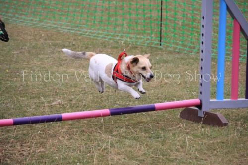 findon_valley_dog_show_2017 (58)