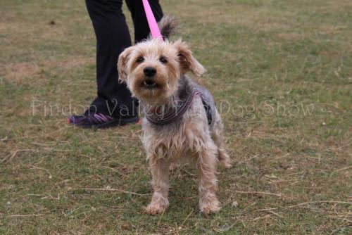 findon_valley_dog_show_2017 (59)