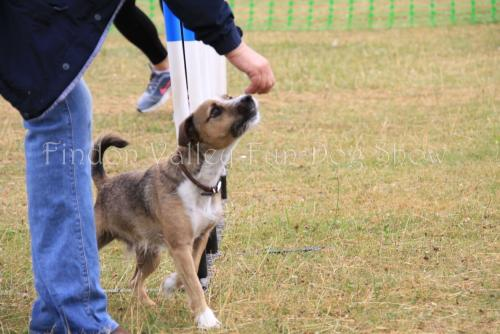 findon_valley_dog_show_2017 (6)