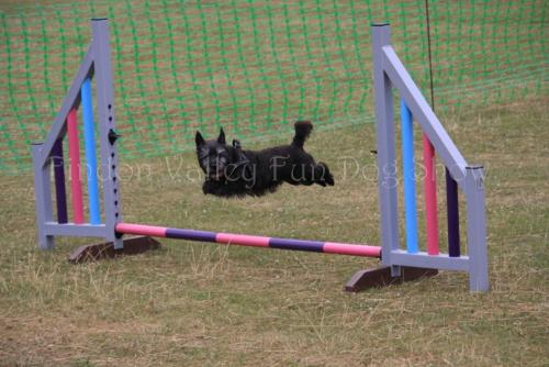 findon_valley_dog_show_2017 (60)