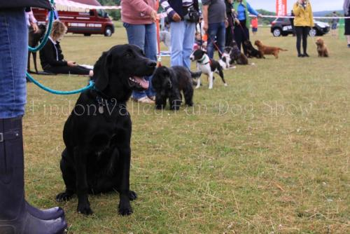 findon_valley_dog_show_2017 (8)
