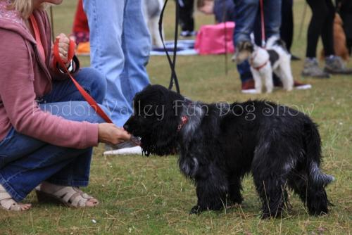 findon_valley_dog_show_2017 (9)